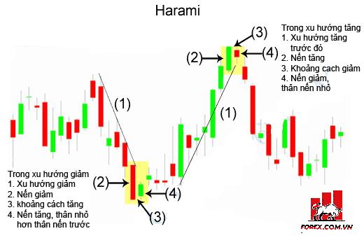 Harami: Mô hình Người Có Mang