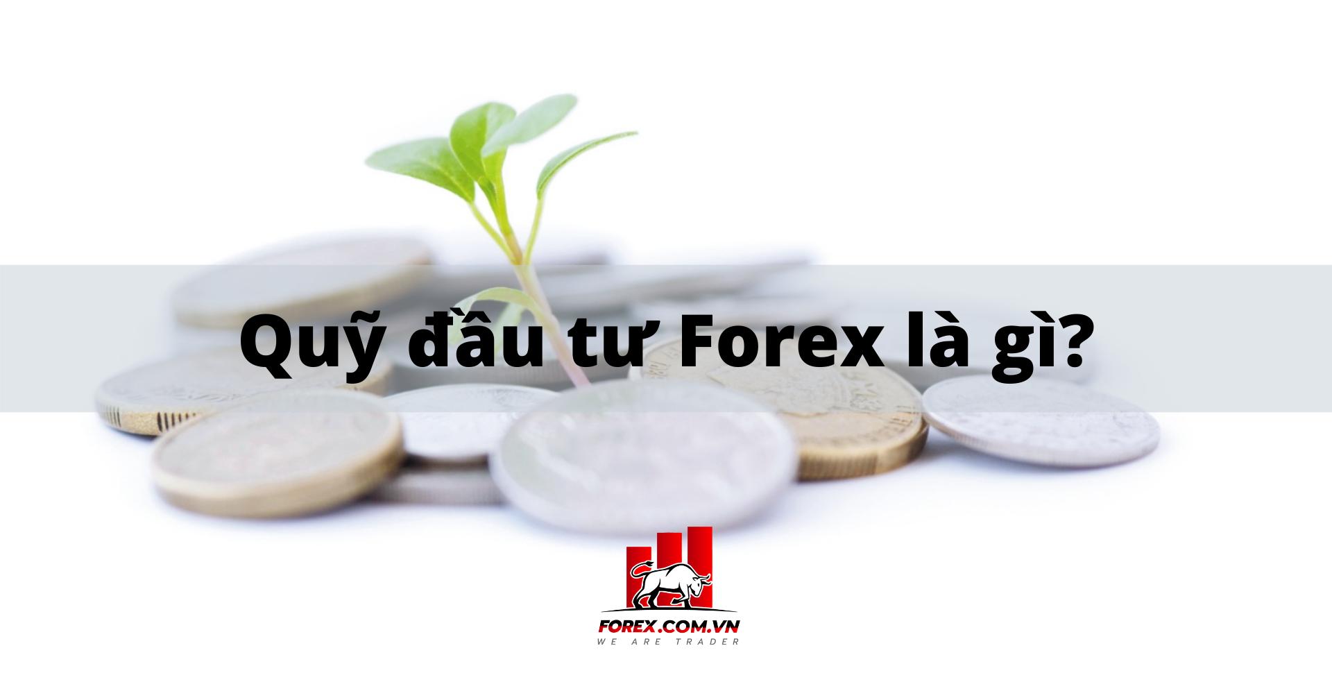 Quỹ đầu tư Forex là gì