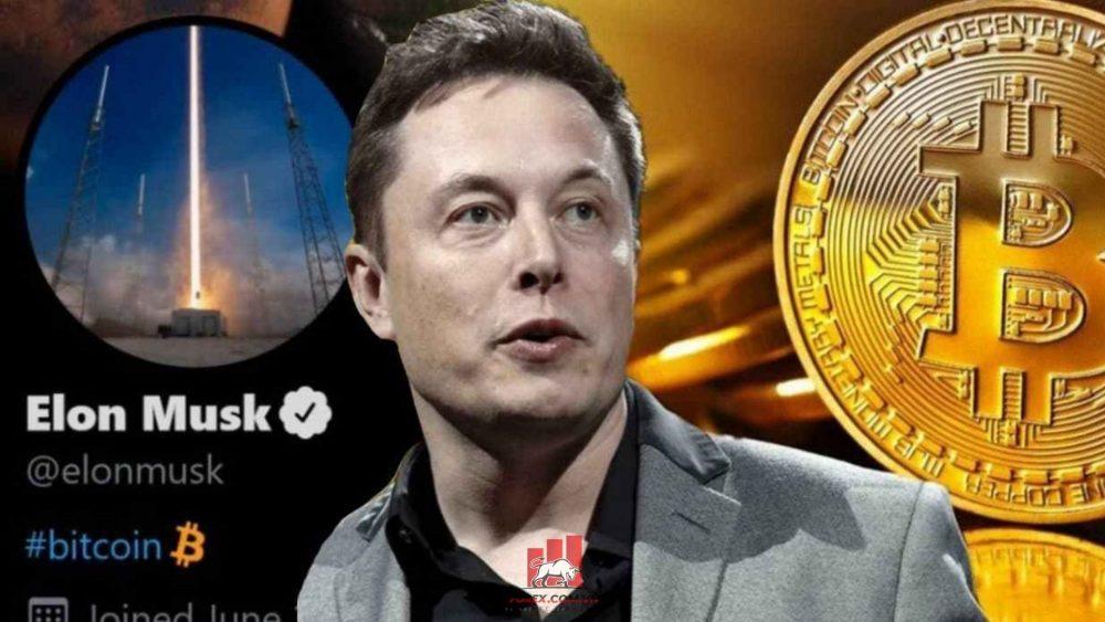elon musk nổi tiếng là người ủng hộ bitcoin