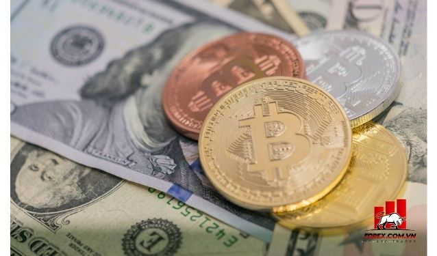 WTF Coin là gì? Có nên đầu tư vào WTF Coin hay không?