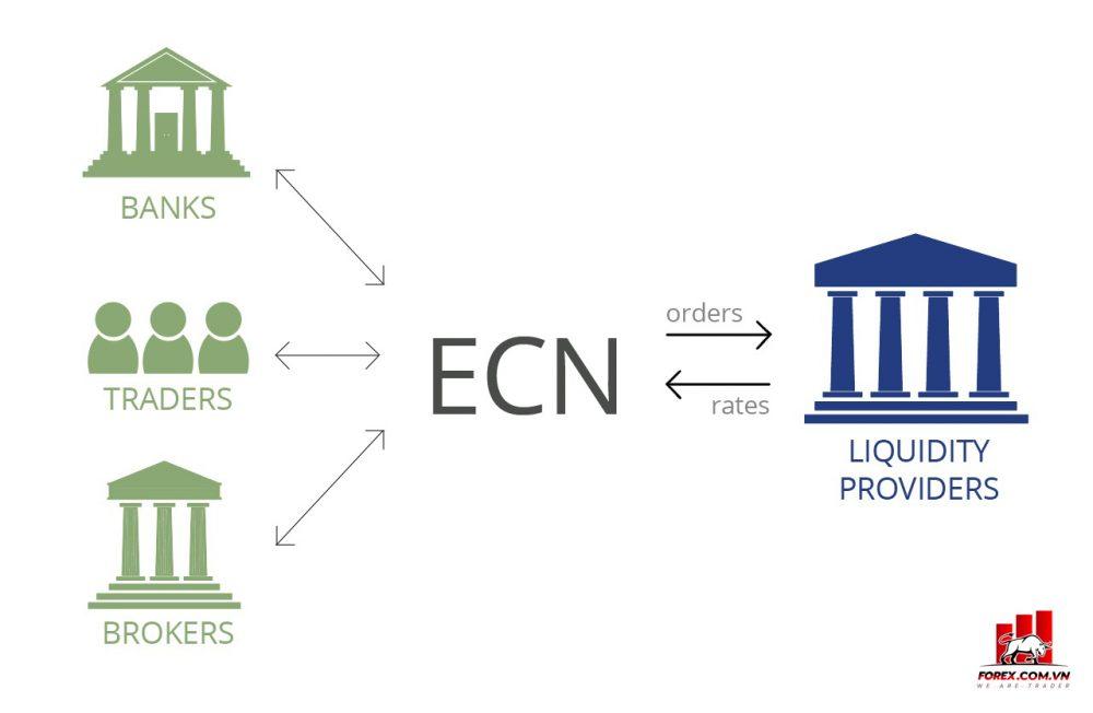 Một số loại tài khoản Trade Forex phổ biến